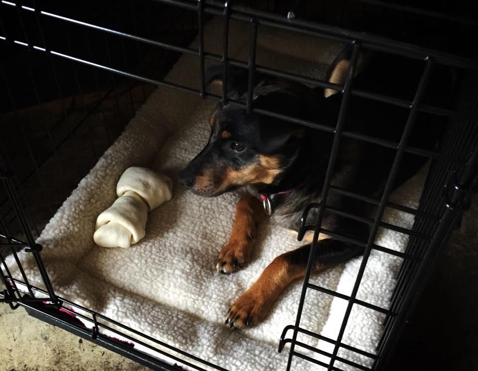 Susan Shop Rescue Dog